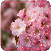 Sakura Japan Garden Live Wallpaper