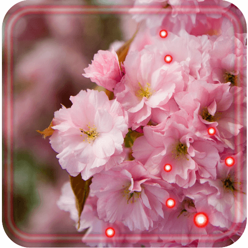 Sakura Japan Garden Live Wallpaper