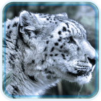 Snow Leopard Eyes live wallpaper