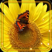 Sunflower Music live wallpaper