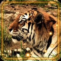 Tigers Predators live wallpaper