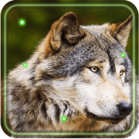 Wolves Gallery live wallpaper