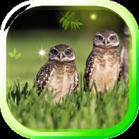 Owl Wild Forest