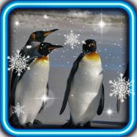 Pinguin live wallpaper