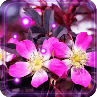 Springs Flowers LWP