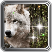 Wild Wolf HD live wallpaper