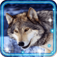 Wolf PhotoHD Live Wallpaper