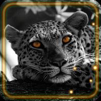 Snow Leopard Sounds