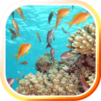 Underwater Sea Life LWP