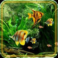 Aquarium Fish 2016
