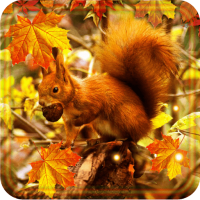 Autumn Squirrels LWP