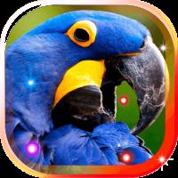 Bright Parrots