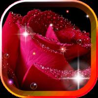 Roses MorningDew 2016LWP
