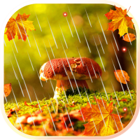Autumn Rain live wallpaper