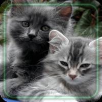 Cats Amazing LWP