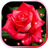 Roses Drops live wallpaper