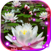 Lotos Lily Water LWP