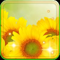 Sunflower Best live wallpaper