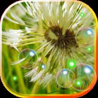 Dandelions live wallpaper