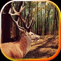 Deers Wild live wallpaper
