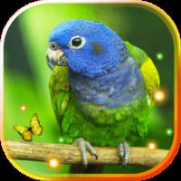Jungles Birds