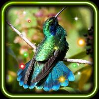 Exotic Hummingbird