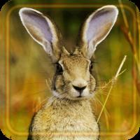 Hares Best LWP