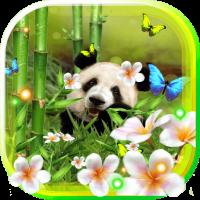 Panda Funny live wallpaper
