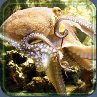 Sea Underwater Predators LWP
