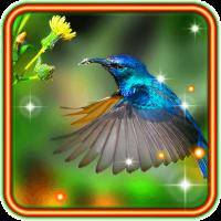 Colibri Love HD