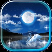 Swan Night Lake