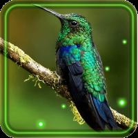 Colibri Spring 3D LWP