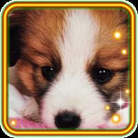 Cool Puppy Pet