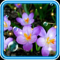 Crocus Flowers Wild