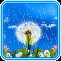 Dandelions Rainy Day