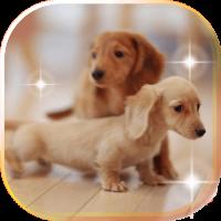 Puppy Fanny live wallpaper
