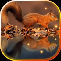 Squirrel Wild Forest