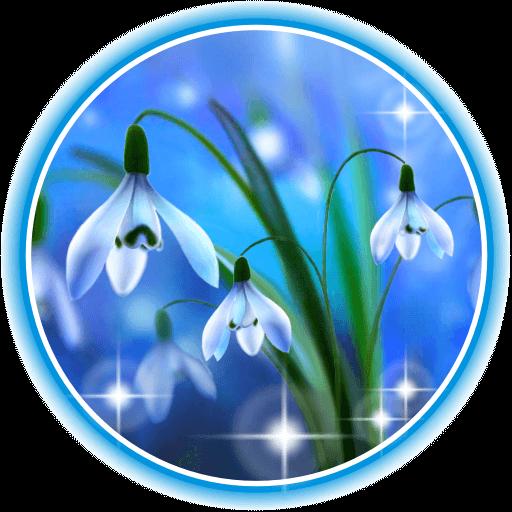 Snowdrops Blue Live Wallpaper