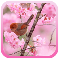 Sakura And Birds LWP