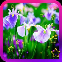 Irises China Garden