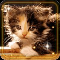 Kittens Voices