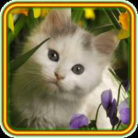 Kitty Fine