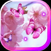 Cherry Japan Sakura