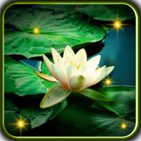 Lilies Best LWP