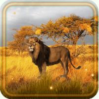 Lion Savanna Wild