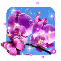 Orchid Spring