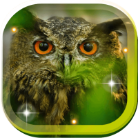 Owl Funny Sounds