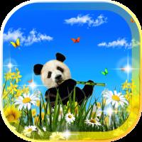 Panda Pretty LWP