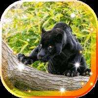 Panther Black Jaguar LWP