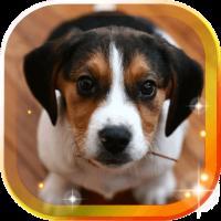 Puppies Voice